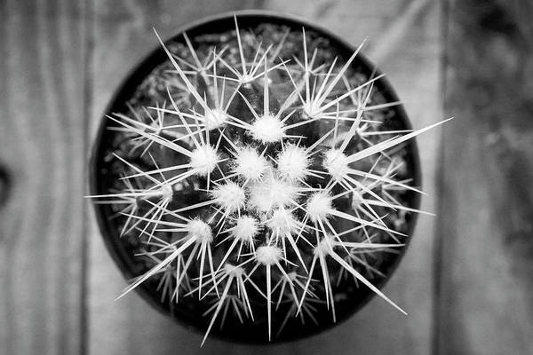 Photograph - Desert Cactus And Succulents 066 by Rich Franco