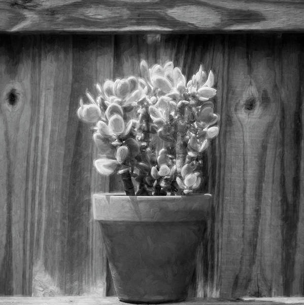 Photograph - Desert Cactus And Succulents 088 by Rich Franco