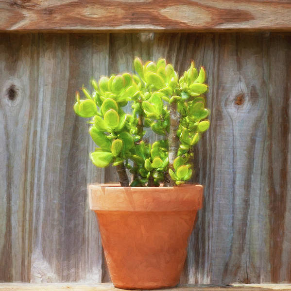 Photograph - Desert Cactus And Succulents 089 by Rich Franco
