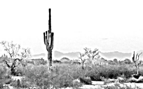 Photograph - Desert Cactus by Grace Dillon