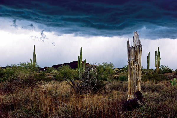 Saguaros Photograph - Desert Cactus Storms At The Superstitions Mountains by Dave Dilli