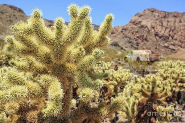 Ghost Town Photograph - Desert Cactus Teddy Bear Cholla Eldorado Canyon Nevada by Edward Fielding
