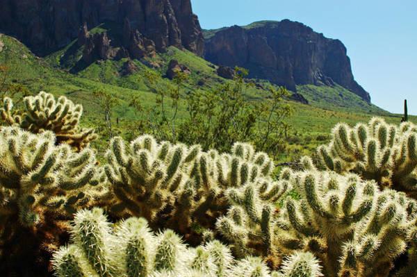 Photograph - Desert Cholla 1 by Jill Reger