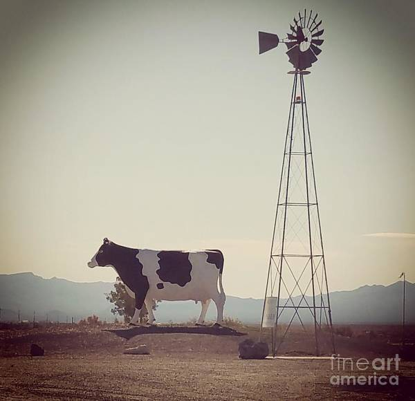 Painting - Desert Cow by Gregory Dyer