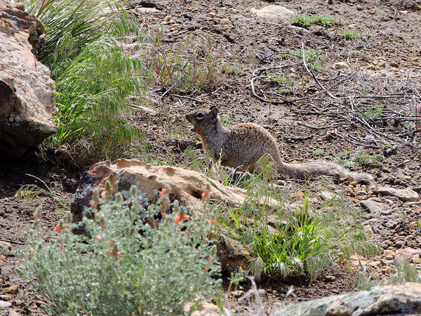 Photograph - Desert Creature by Andrew Chambers