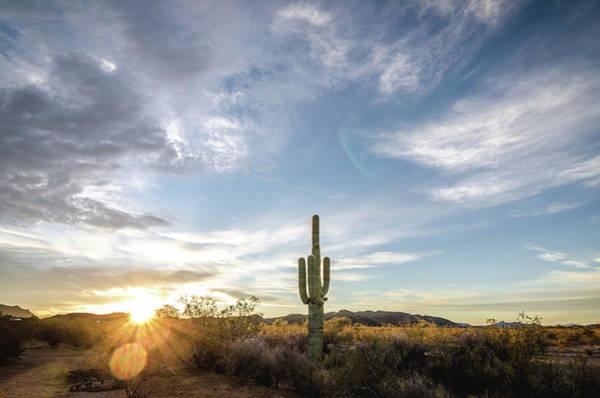 Photograph - Desert Dawn by Margaret Pitcher