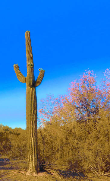 Photograph - Desert Duo In Bloom by Judy Kennedy