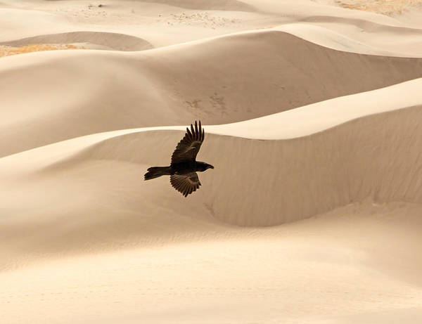 Photograph - Desert Flight by Nicholas Blackwell