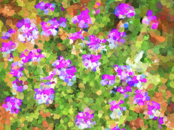 Photograph - Desert Flowers In Abstract by Penny Lisowski
