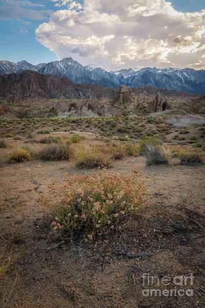 Wall Art - Photograph - Desert Flowers  by Michael Ver Sprill
