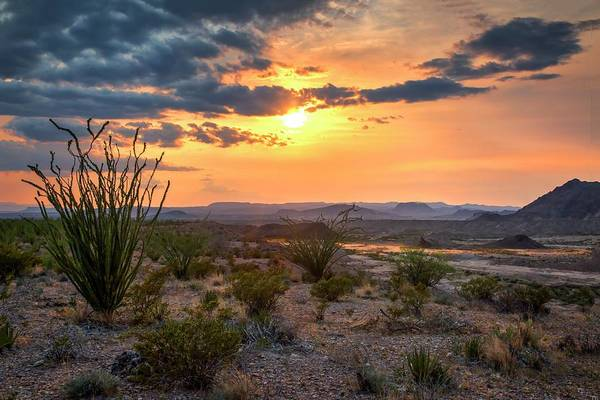 Photograph - Big Bend Desert Glow II by Harriet Feagin