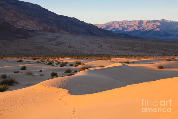 Wall Art - Photograph - Desert Glow by Suzanne Luft