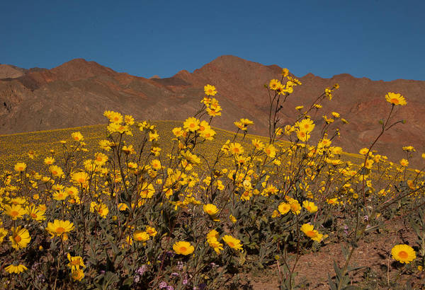 Photograph - Desert Gold 3 by Susan Rovira