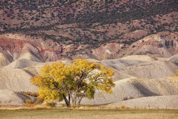 Photograph - Desert Gold by Denise Bush