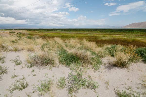 Photograph - Desert Grass by Margaret Pitcher