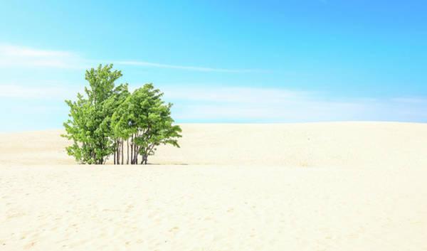 Wall Art - Photograph - Desert Green Trees by Dan Sproul