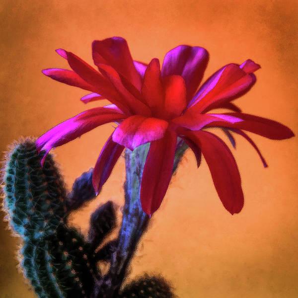 Cactus Mixed Media - Desert Heat by Veronika Countryman