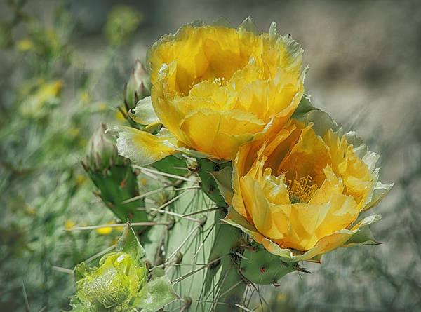 Photograph - Desert In Yellow by Elaine Malott