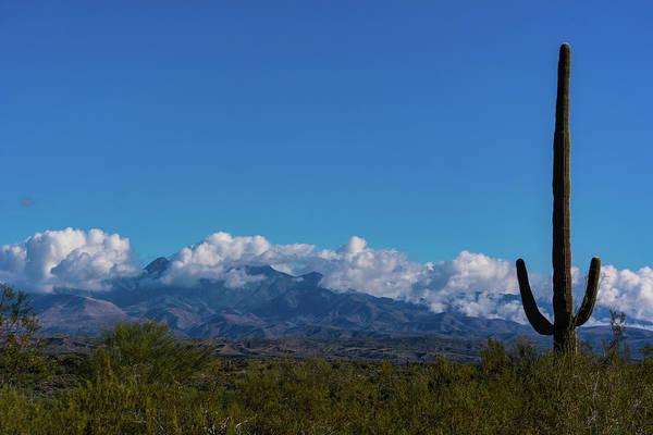 Desert Inversion Cactus Art Print