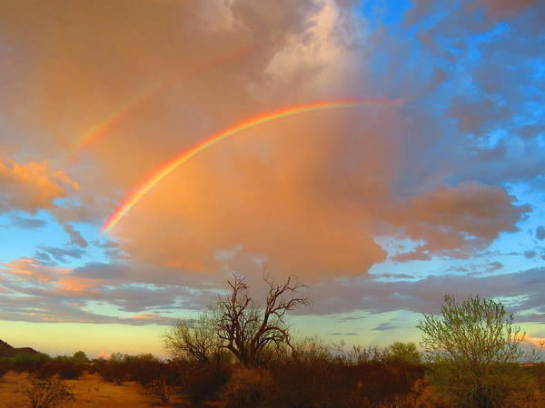 Photograph - Desert Ironwood And Double Rainbows by Judy Kennedy