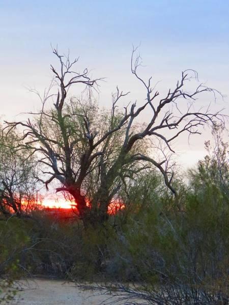 Photograph - Desert Ironwood Sunrise by Judy Kennedy