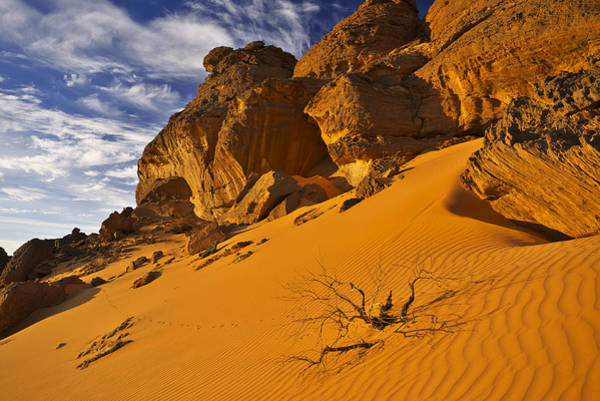 Photograph - Desert by Ivan Slosar