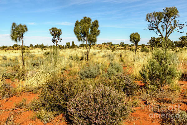 Photograph - Desert Landscape 03 by Werner Padarin