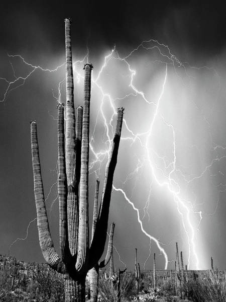 Photograph - Desert Lightning by Dominic Piperata
