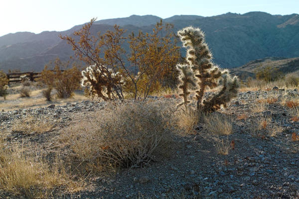Photograph - Desert Morning by Peter Dyke