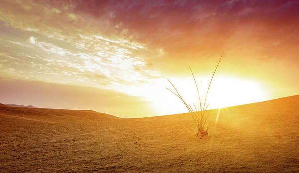 Wall Art - Photograph - Desert Near Al Ain, Uae At Dawn by Alexey Stiop