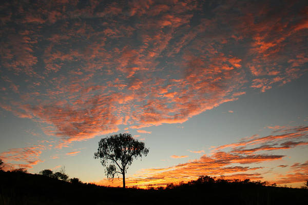 Photograph - Desert Oak Tree Silhouetted At Sunrise by Keiran Lusk