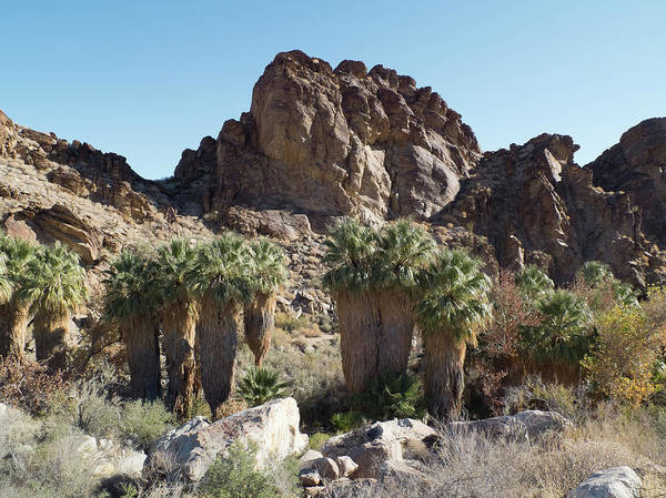 Photograph - Desert Oasis II by Frank DiMarco