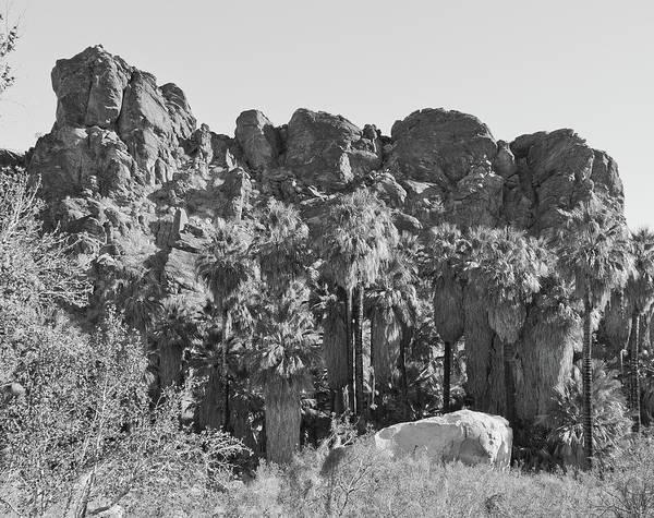 Photograph - Desert Oasis IIi by Frank DiMarco