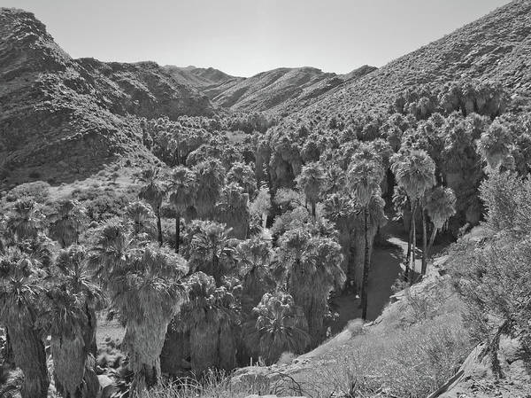 Photograph - Desert Oasis Iv by Frank DiMarco