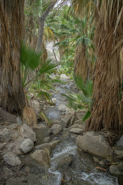 Photograph - Desert Palms Oasis by Frank DiMarco