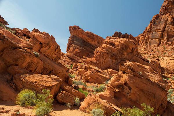 Photograph - Desert Paradise by Frank Wilson