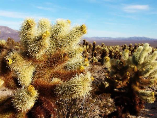 Wall Art - Photograph - Desert Plants - Porcupine Cholla by Glenn McCarthy