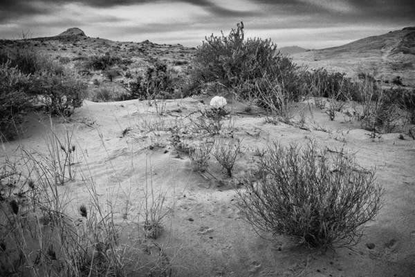 Wall Art - Photograph - Desert Rose by Stephen Campbell
