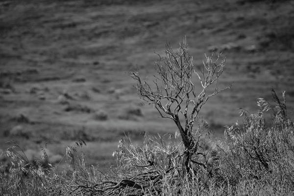 Wall Art - Photograph - Desert Sagebrush Bw by Rick Mosher