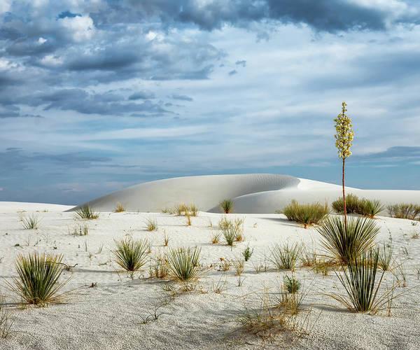 Yucca Elata Wall Art - Photograph - Desert Sandbox 5x6 by James Barber