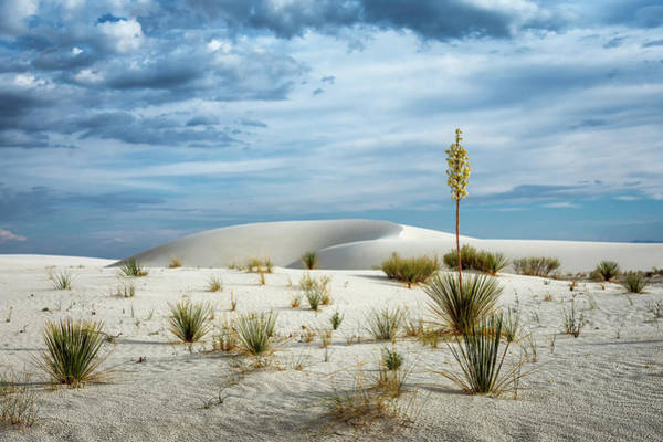 Yucca Elata Wall Art - Photograph - Desert Sandbox by James Barber