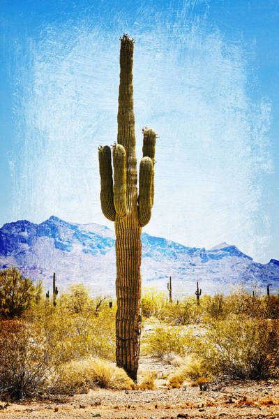 Photograph - Desert Sentinel by Tatiana Travelways