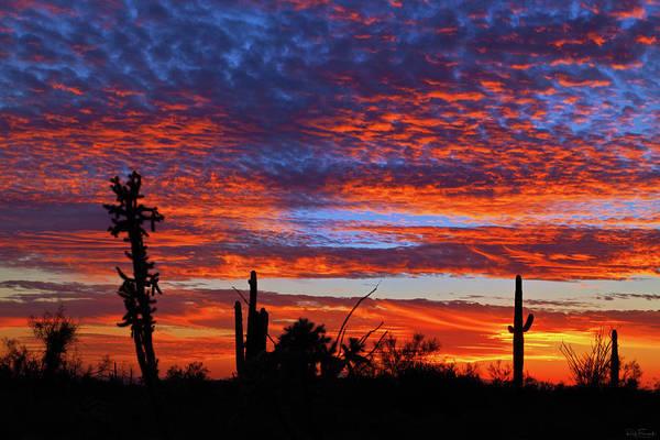 Photograph - Desert Silhouettes by Rick Furmanek