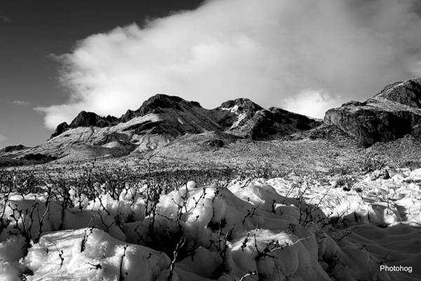 Adam Jones Wall Art - Photograph - Desert Snow  by Adam Jones