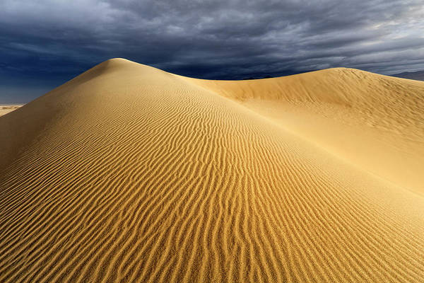 Wall Art - Photograph - Desert Storm by Nicki Frates