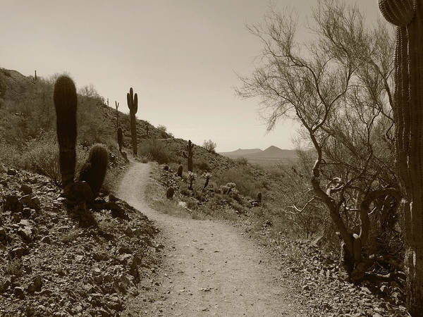 United States Territory Photograph - Desert Trail by Gordon Beck