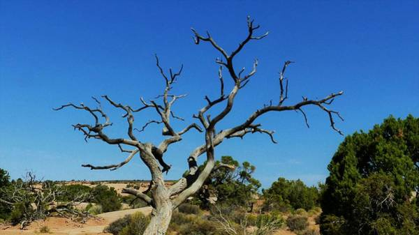 Digital Art - Desert Tree by Barkley Simpson