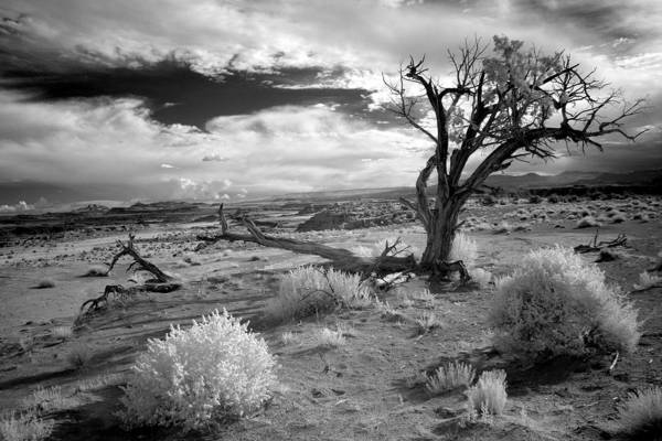 Black And White Wall Art - Photograph - Desert Tree by G Wigler