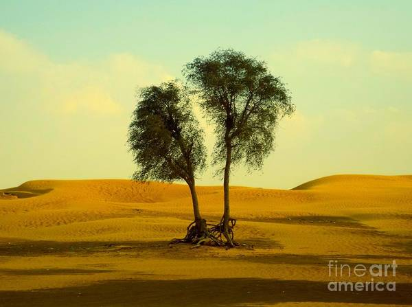 Photograph - Desert Trees by Barbara Von Pagel