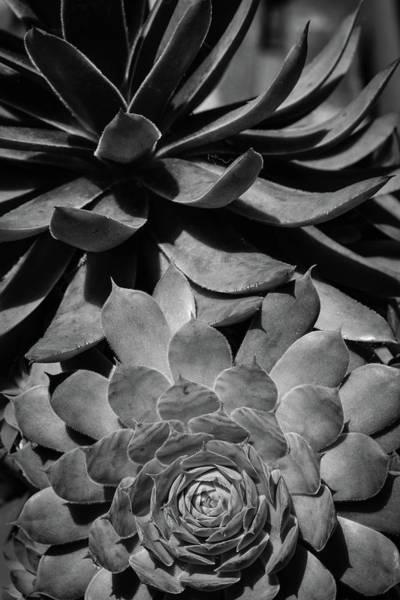Photograph - Desert Types by Glenn DiPaola